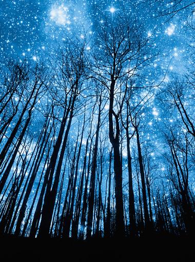 Los sonidos del bosque nocturno